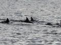 dolphin watcing1.jpg