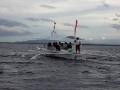 dolphin watcing2.jpg