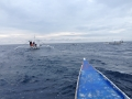 dolphin watcing6.jpg